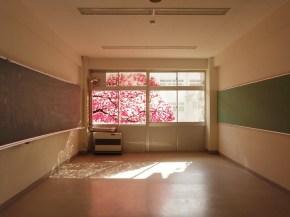 Okurie, flores para underribo
